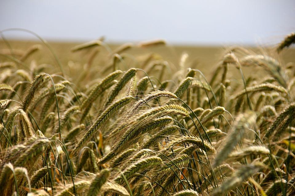 nouveaux OGM post nakide